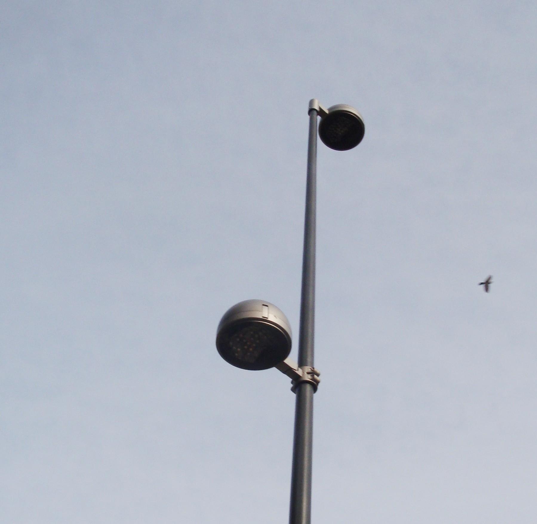 Ardea il progetto di illuminazione del consorzio lido dei for Led lampade