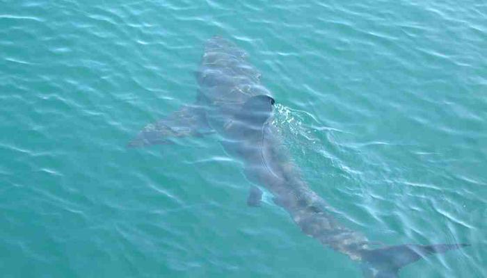 squalo fiumicino