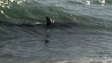 squalo-ostia-oggi