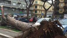 albero nettuno
