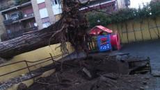 albero caduto scuola Don Bosco Pomezia2