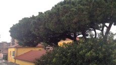 albero scuola don bosco pomezia