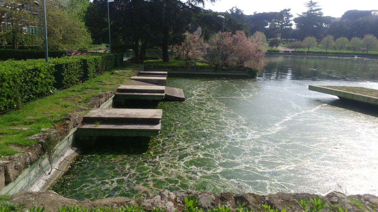 Laghetto dell 39 eur infestato da alghe e liquami in corso for Alghe laghetto
