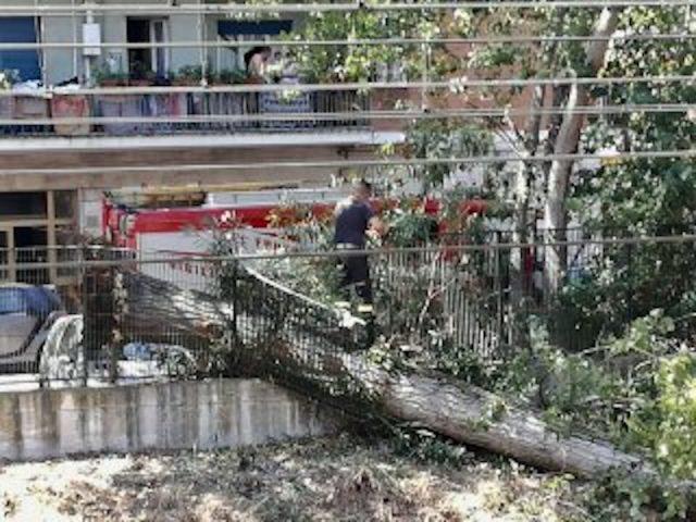 Roma, albero cade sui binari: bloccata la Roma Lido