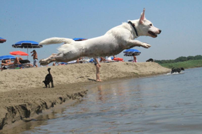 Bau beach a ostia fdi s alla alla spiaggia per cani - Alla colorazione della spiaggia ...
