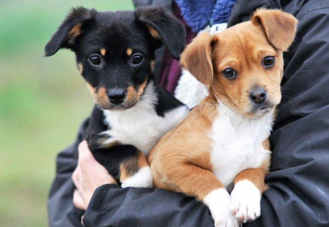 Alimentazione consigliata per cani di piccola taglia for Nomi per cagnolini di piccola taglia