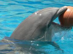 delfini lazio