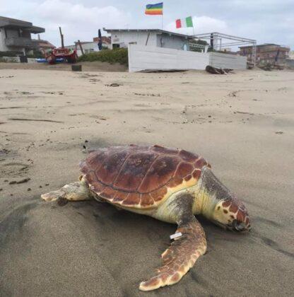 Torvaianica, trovata tartaruga spiaggiata: era stata 'etiche