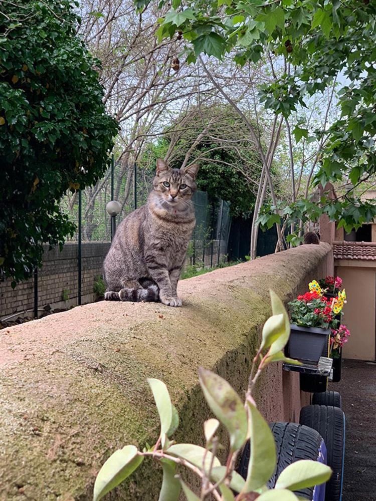 'Adotta un amico': sabato 26 settembre vieni a conoscere i gatti romani all'oasi felina di Porta Portese