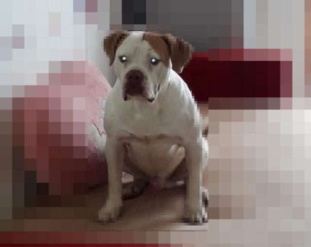 aggressione cane salzare