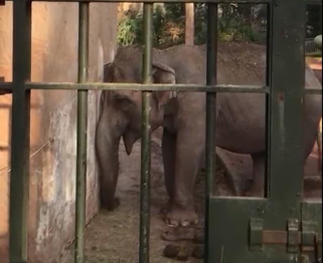 elefante bioparco