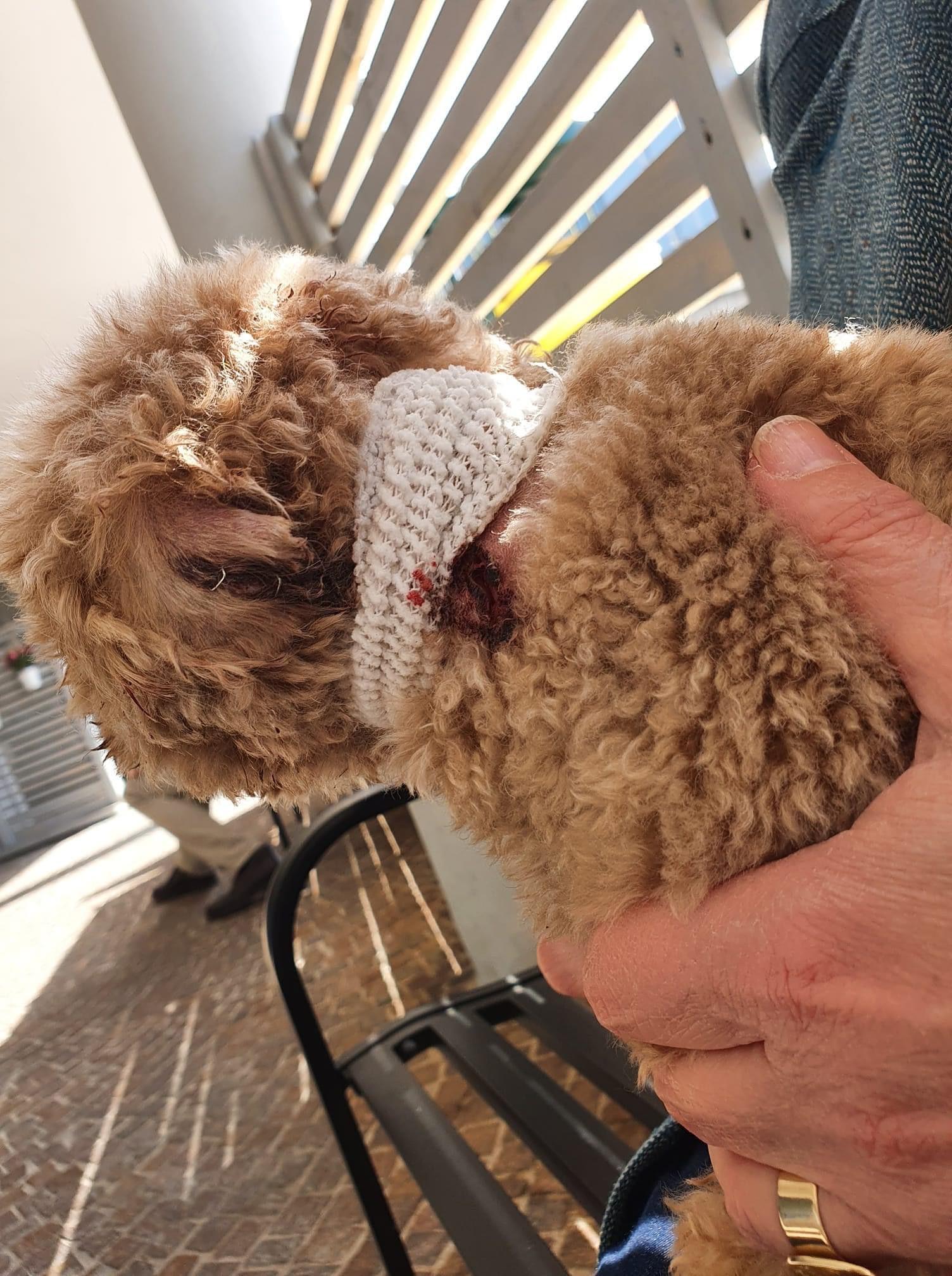 Roma, cane aggredisce un cucciolo nell'area cani ma il padrone resta a telefono: cercasi testimoni