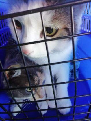 Ladispoli, due gatti abbandonati dentro la valigia: l'appello per risalire al colpevole