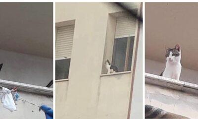 anzio gatti in casa soli