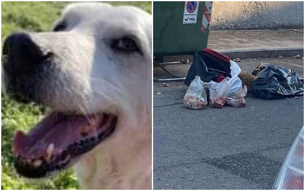 cane-fatto-a-pezzi-cecina