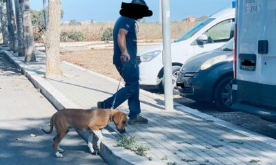 appartamento via Polonia cani maltrattati