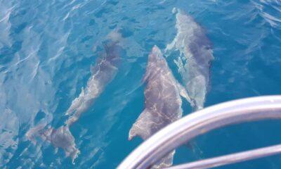delfini terracina