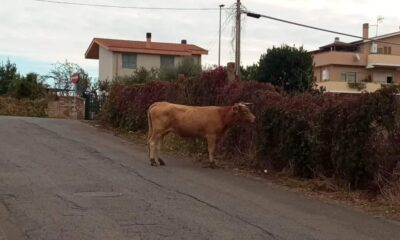 roma-toro-via-laurentina
