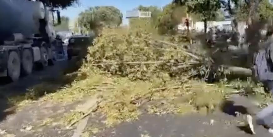 albero-caduto-viale-marconi-roma