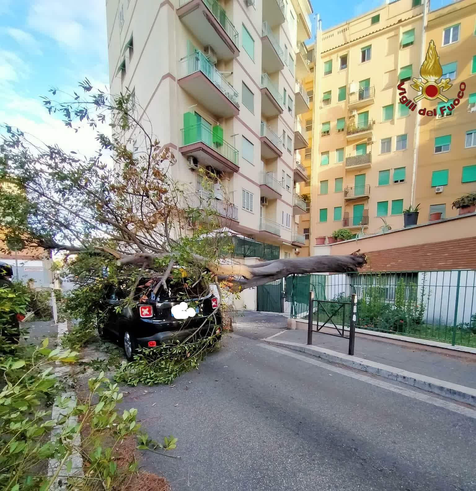 albero su auto crolalto