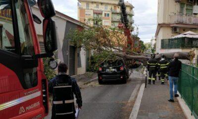 pigneto crollo albero su auto